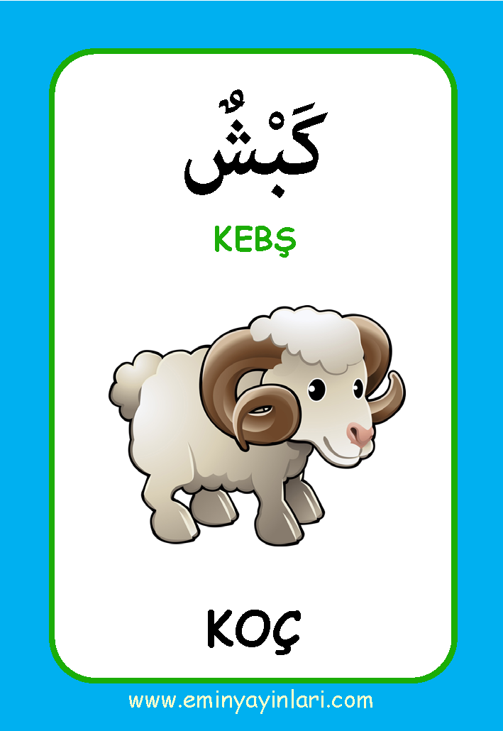 Arapça 01.Hayvanlar Âlemi / Resimli Kelime Kartları 72-Kart